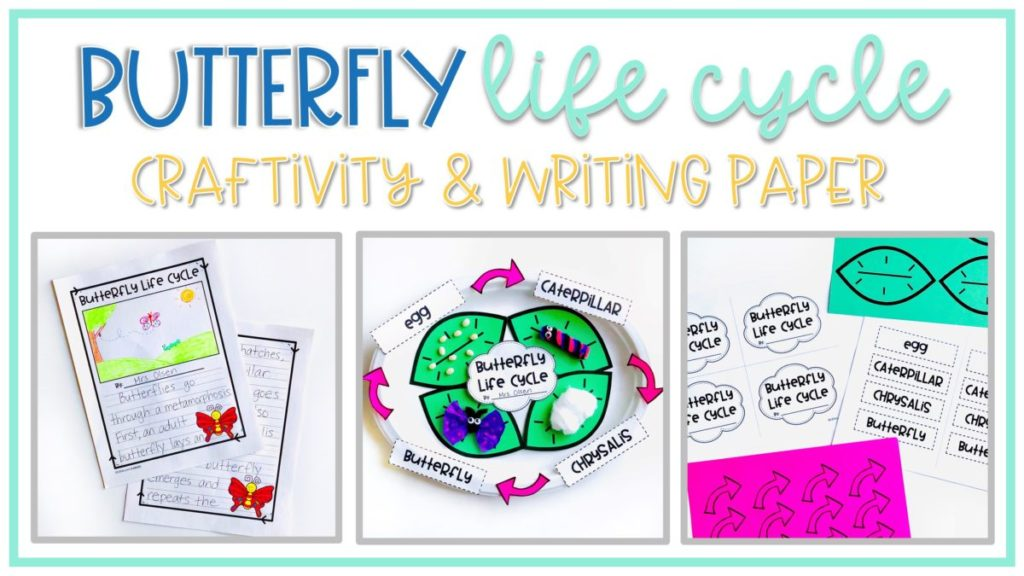 butterfly life cycle writing